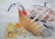 Bird 2009